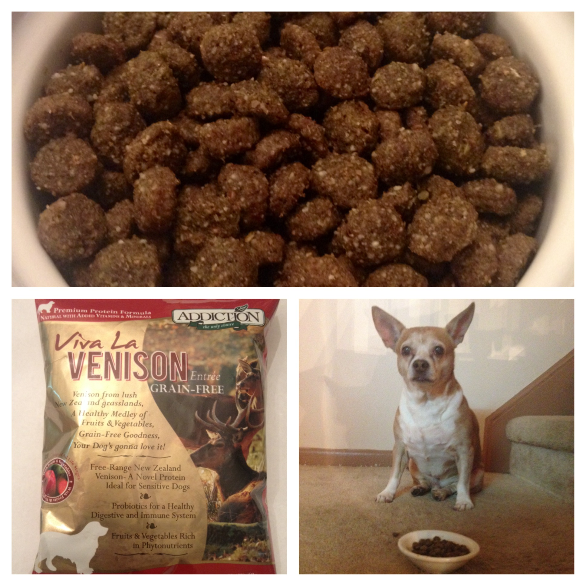 My Wonderful Experience With Addiction Pet Food